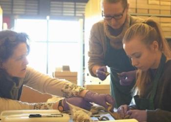 Work Experience at The Novium Museum