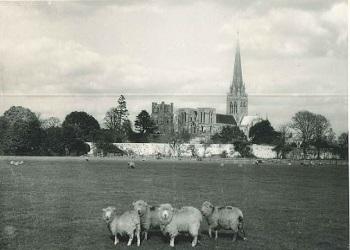 Sheep grazing on Westgate Fields, 1957