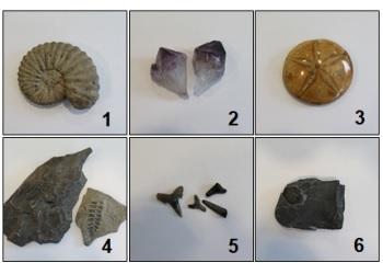 Fossil Quiz