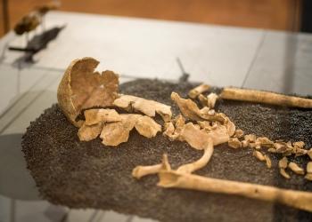 North Bersted Man (skeleton)