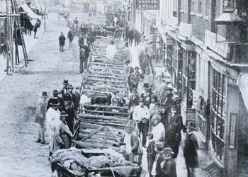 Livestock markets of Chichester