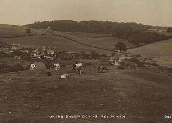 On the sheep downs, Petworth